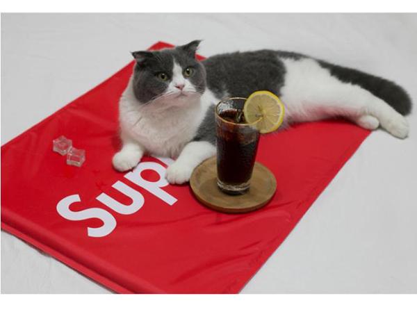 supreme 猫 クールマット