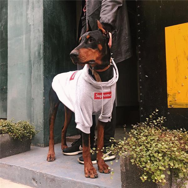 シュプリーム 犬服 supreme犬用グッズ 犬用ペット服 春秋冬 シュプリーム ドッグウェア 大型犬 中型犬 パーカー ゴールデンレトリバー 高品質 芸能人愛用