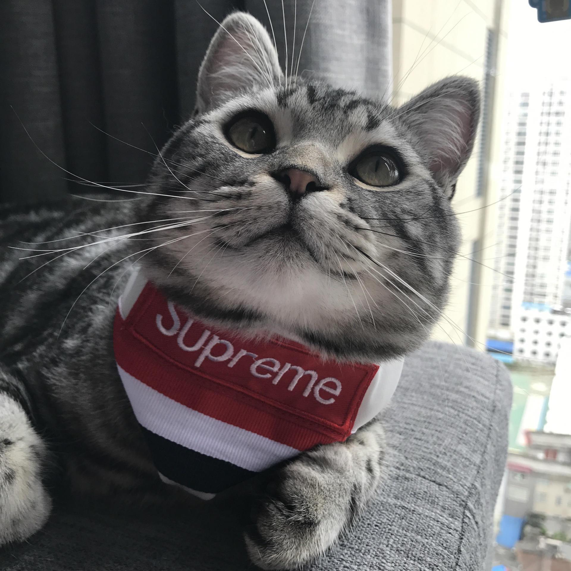 supreme ペットバンダナ