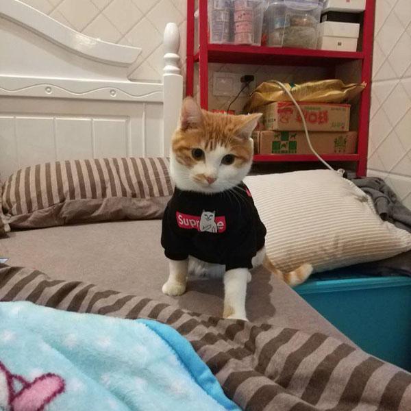 シュプリーム 猫服